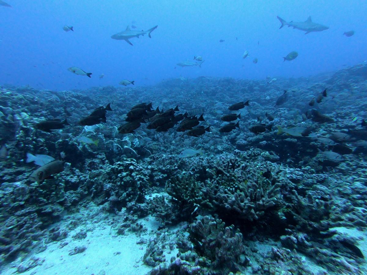 duiken Frans-Polynesië