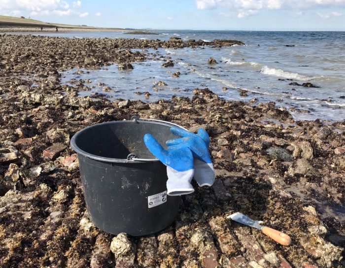 emmer oesters plukken