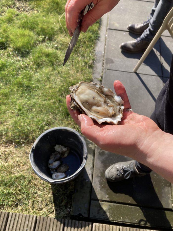 oester schoonmaken