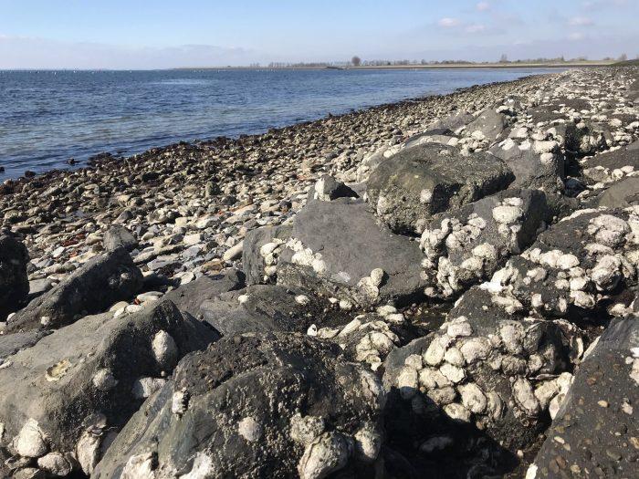 oesters Bergse Diepsluis