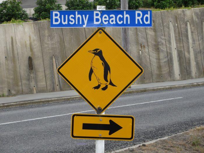 pinguin verkeersbord