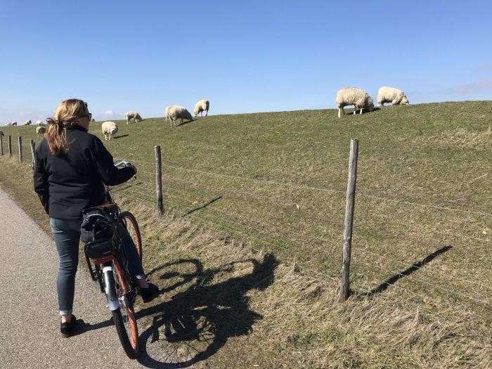 fietsen zeeland
