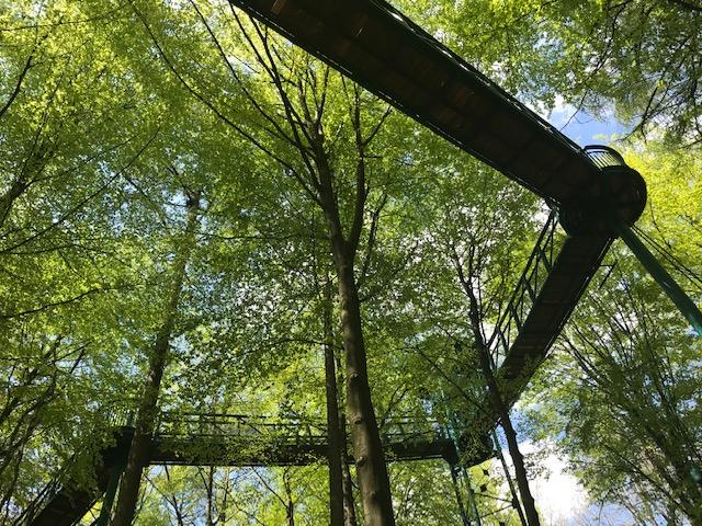 boomkroonpad Drenthe