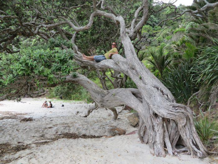 new Chums Beach Nieuw Zeeland