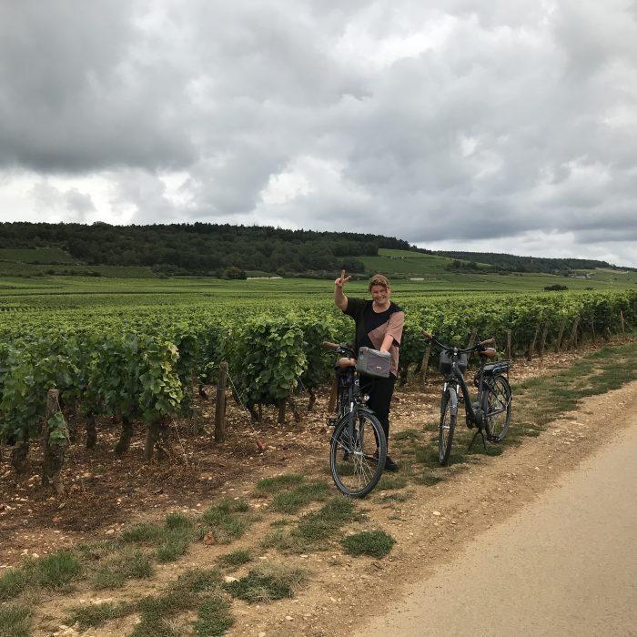 Wijnranken in Frankrijk